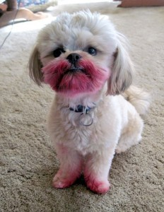 no-i-havent-seen-your-lipstick