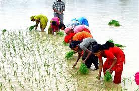 Rain brings cheers to farmers,Rain